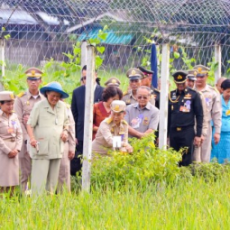 Her Royal Highness Princess Maha Chakri Sirindhorn Harvests Rice at the Chulachomklao Royal Military Academy, Nakhon Nayok Province