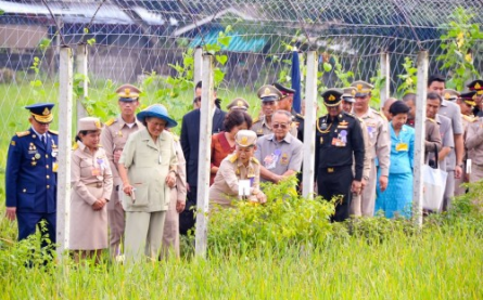 Her Royal Highness Princess Maha Chakri Sirindhorn Harvests  ...