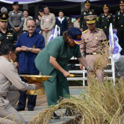 HRH Princess Maha Chakri Sirindhorn Harvests Rice at the Chulachomklao Royal Military Academy