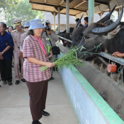 HRH Princess Maha Chakri Sirindhorn Inspects the Progress of Kasornkasiwit School in Sa Kaeo Province