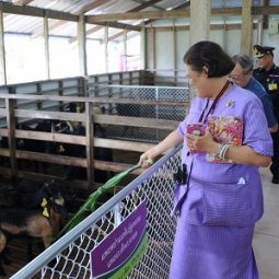 H.R.H. Princess Maha Chakri Sirindhorn Visits the Chaipattana Foundation's Black Bengal Goat Domestication Project in Songkla Province