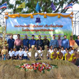 Assistant Secretary - General of the Chaipattana Foundation Presided Over the Traditional Event of 'Transplant on Mother's Day, Harvest on Father's Day' on the Chaipattana's Land in Nakon Ratchasima Province