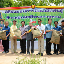 Jasmine Rice Seed Distribution Ceremony to Farmers in Surin Province