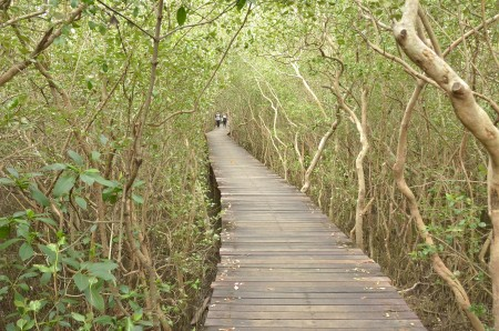 mangrove forest02